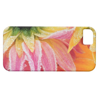 Frost on the last blooms of the fall - Dalhia - iPhone 5 Case