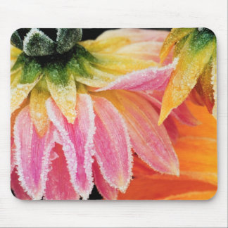 Frost on the last blooms of the fall - Dalhia - Mouse Pad