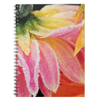Frost on the last blooms of the fall - Dalhia - Spiral Notebook