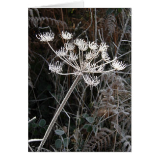 Frost Transformation in Cheshire Greeting Card