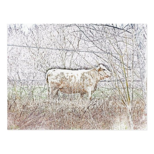 Frosted Cow Postcard