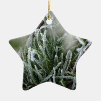 Frosted foliage christmas ornament