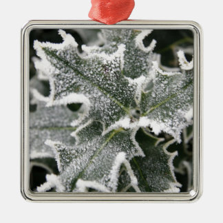 Frosted Holly Leaves Silver-Colored Square Decoration