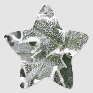 Frosted Holly Leaves Star Sticker