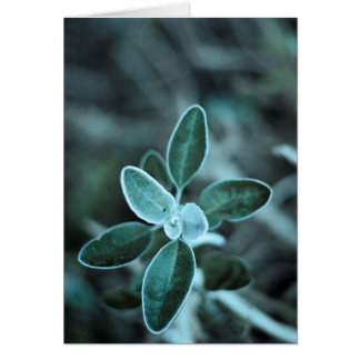 Frosted Leaf Card