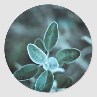 Frosted Leaf Classic Round Sticker