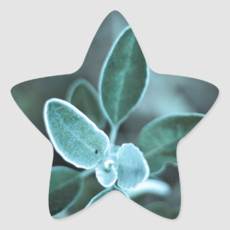Frosted Leaf Star Sticker