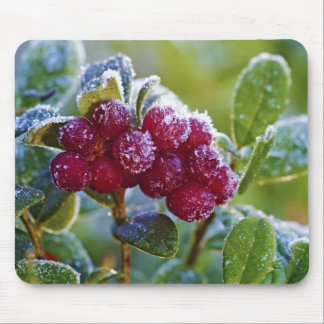 Frosted lingonberries mouse pad