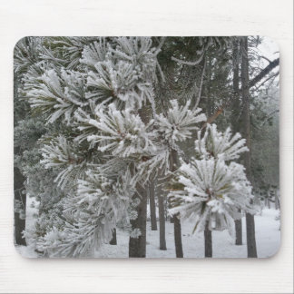 Frosted Pine/Foggy Day, Conifer, CO2 Mouse Pad