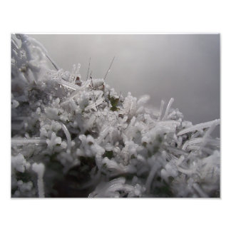 Frosted Plants Photographic Print
