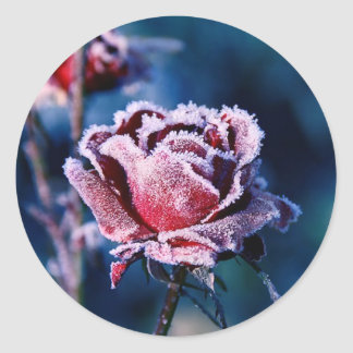 Frosted Rose Classic Round Sticker