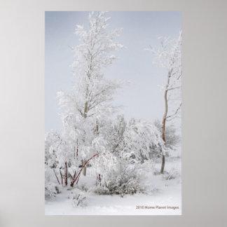 Frosted Tree Mono Lake CA Print
