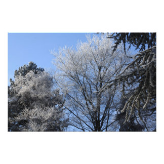 frosted trees photo art