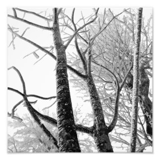 Frosted Winter Trees | Photography Photograph