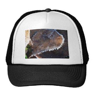FROSTY AUTUMN CAP