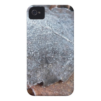 FROSTY AUTUMN LEAF iPhone 4 Case-Mate CASES