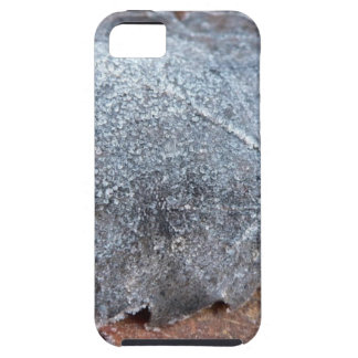 FROSTY AUTUMN LEAF iPhone 5 COVER