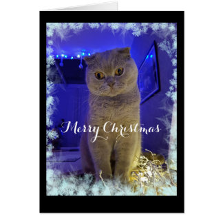 Frosty Cat Christmas Card