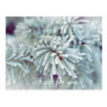Frosty Pine Bough Holiday Gift Certificate