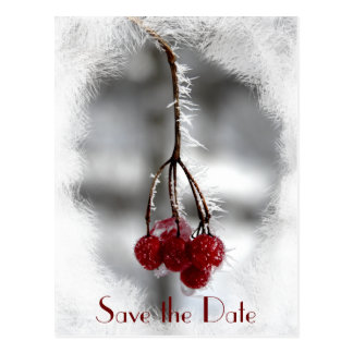 Frosty Red Berries Winter Wedding Save the Date Postcard