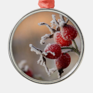 Frosty rose hips in sunlight Silver-Colored round decoration