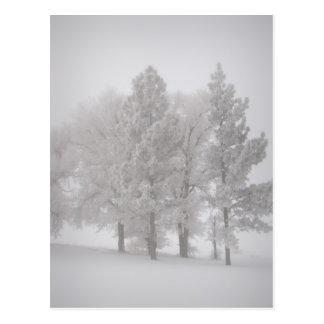 Frosty Trees in Winter Snow Postcard