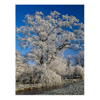 Frosty winter scene, England Postcard