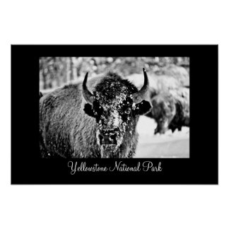 Frosty Yellowstone Bison with Title Poster