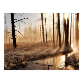 Frosty Yellowstone Morning Postcard