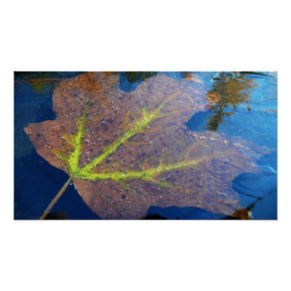 Frozen Fall Maple Leaf Autumn Nature Poster