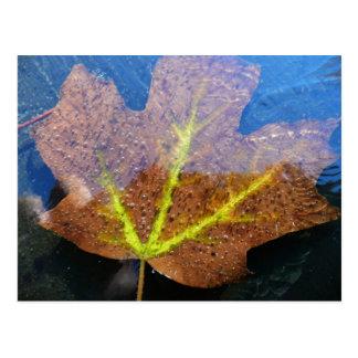 Frozen Fall Maple Leaf Postcard