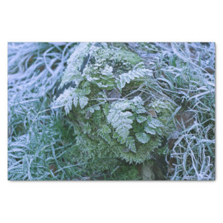 Frozen Fern Tissue Paper
