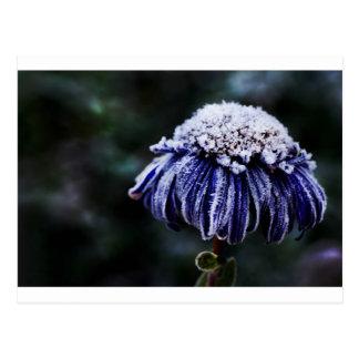 Frozen flower postcard