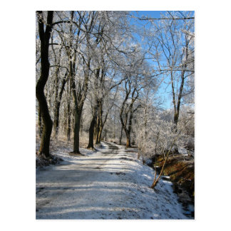 frozen forest trail post card