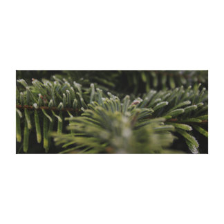 Frozen Pine Tree Canvas Print