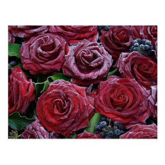 Frozen Roses Postcard