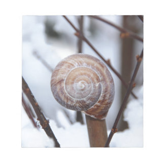 Frozen Snail Shell in Snow Notepad