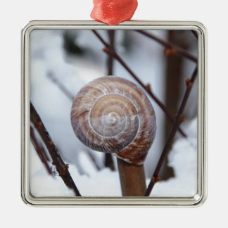 Frozen Snail Shell in Snow Silver-Colored Square Decoration