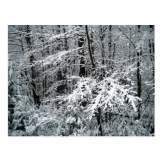 Frozen Tree Branches Postcard