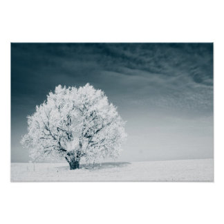 Frozen tree on winter field and blue sky poster