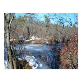 Frozen Wetlands Pond Postcard