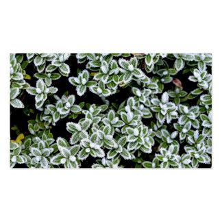 Frozen Winter Plants Pack Of Standard Business Cards