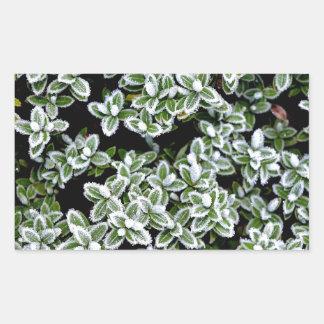 Frozen Winter Plants Rectangular Sticker