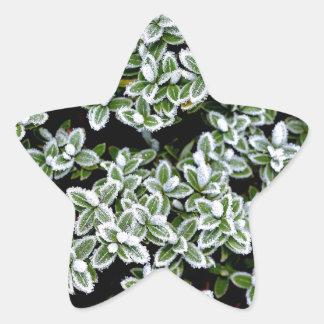 Frozen Winter Plants Star Stickers