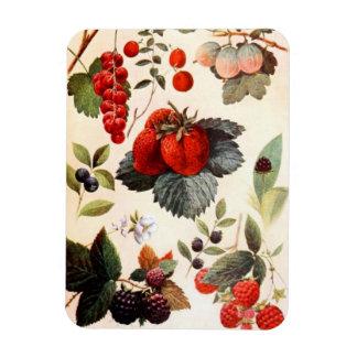 Fruit Botanical Rectangular Photo Magnet