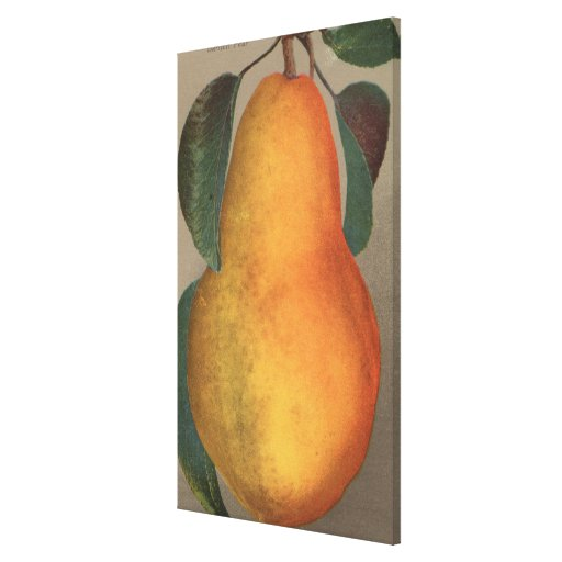 Fruit Chromo Lithograph of Bartlett Pear Stretched Canvas Print