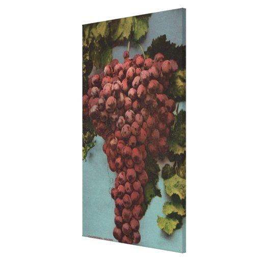 Fruit Chromo Lithograph of California Grapes Canvas Prints