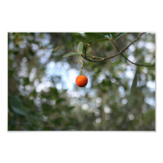 Fruit of the tree of madroño in the mountain range photo