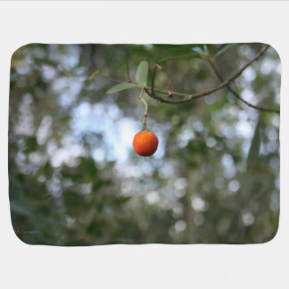 Fruit of the tree of madroño in the mountain range pramblanket