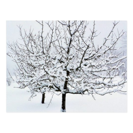 Fruit Tree In Winter Clothing Postcard